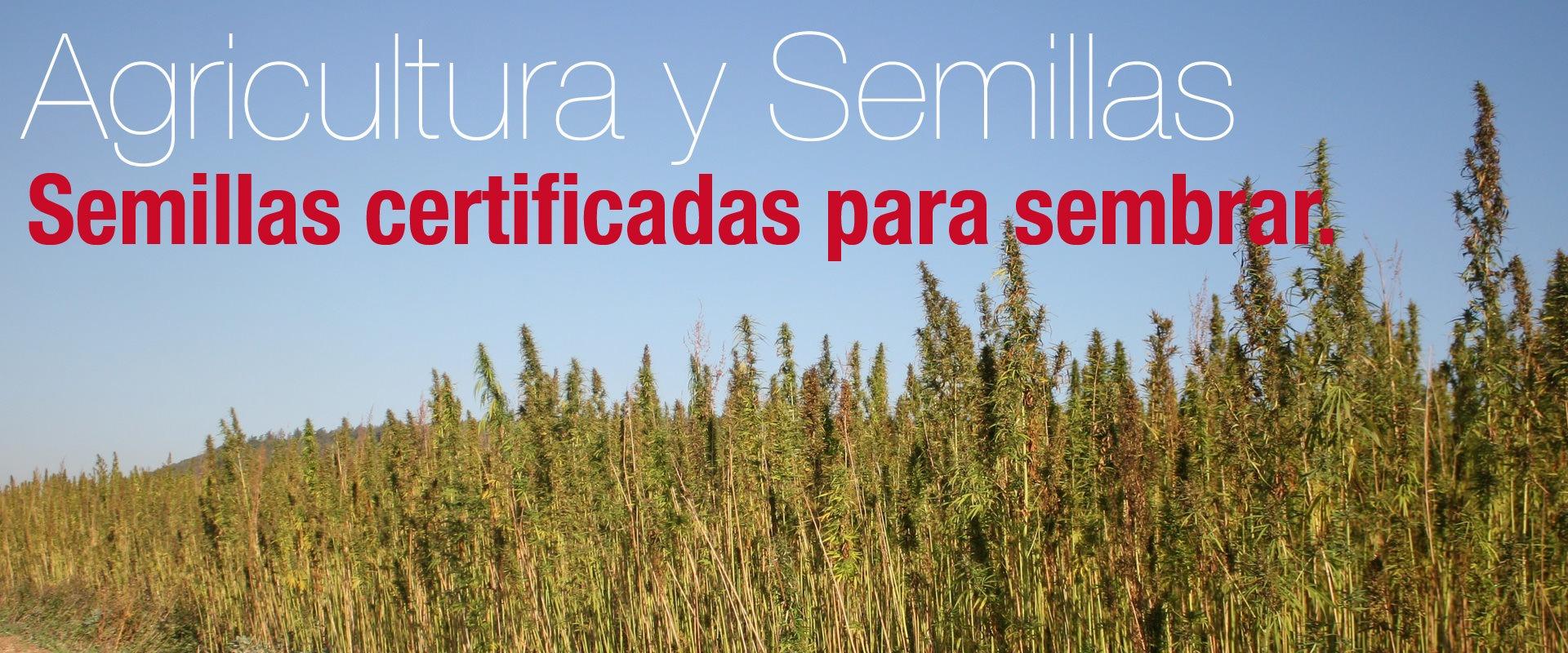 Agricultura y semillas del cáñamo.