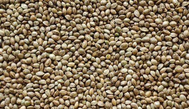 Farming & seeds